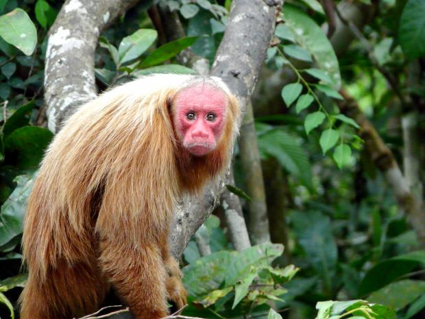 how many animal species are there in the amazon rainforest