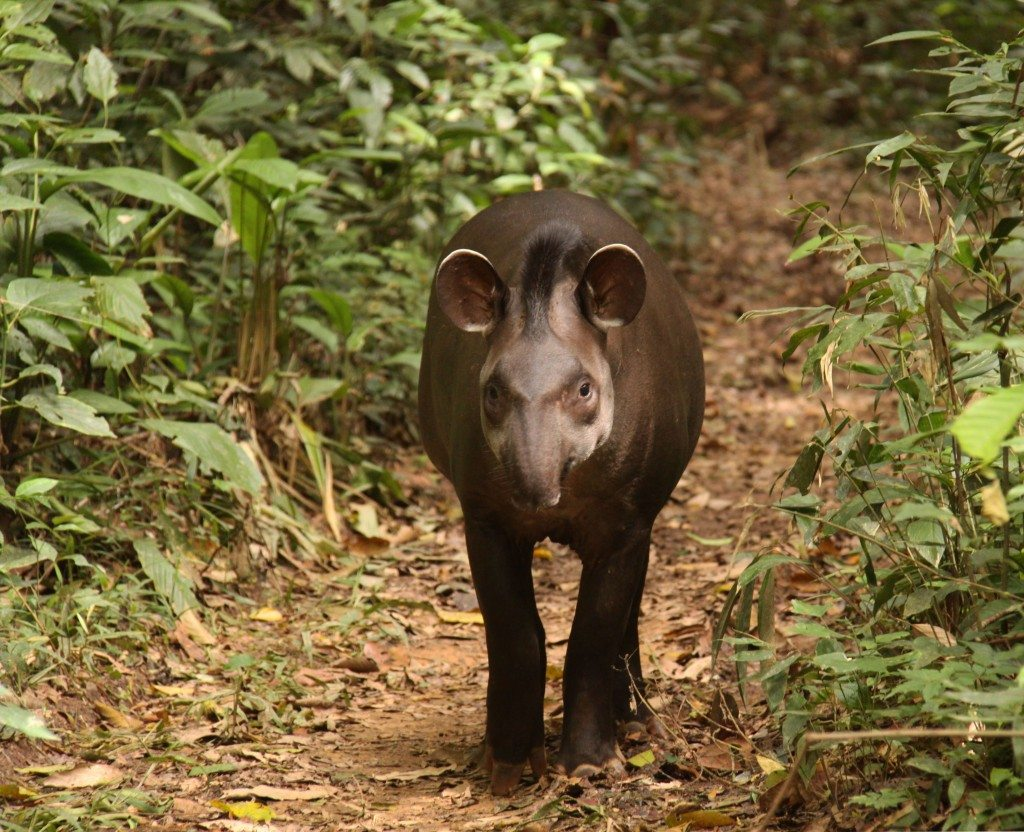 the threatened amazon rainforest The endangered species in the rainforest of brazil include animals and plants that are threatened to the point of extinction if steps aren't taken to protect them.